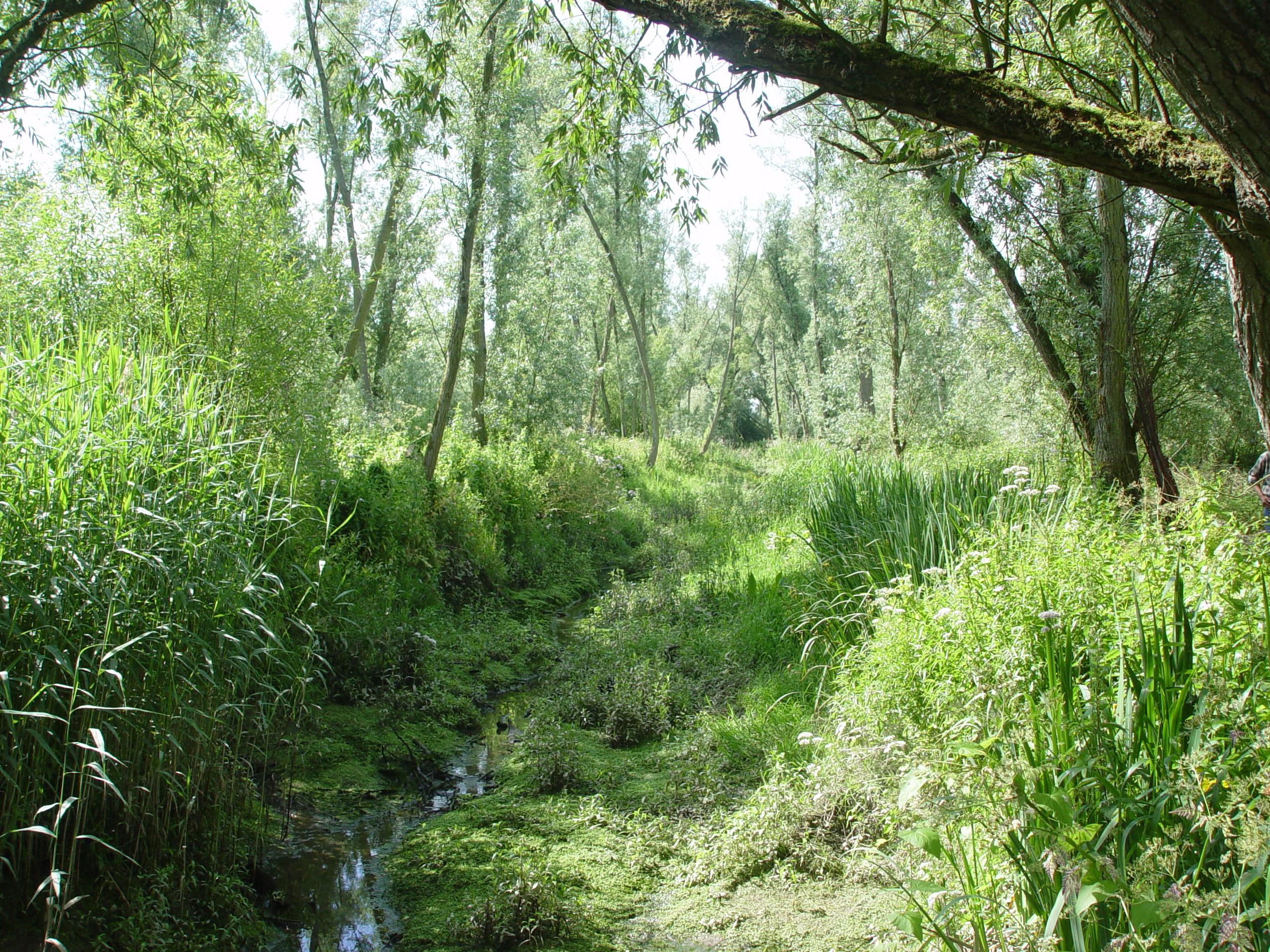 Getijdenbos