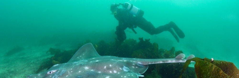 De reusachtige vleet kan meer dan tweeëneenhalve meter lang worden. Foto: Peter Verhoog/WWF-NL