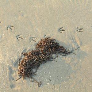 Vogelsporen op de Zandmotor